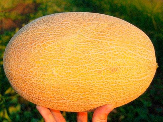 Огромный ассортимент семян для выращивания в Украине