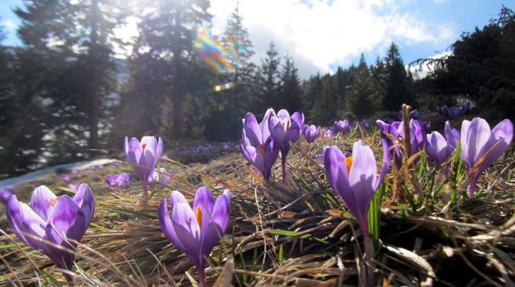 Драгобрат покинул последний лыжник: красота опустевших гор. ФОТО