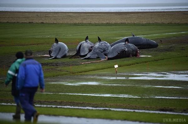 Мертві кити3