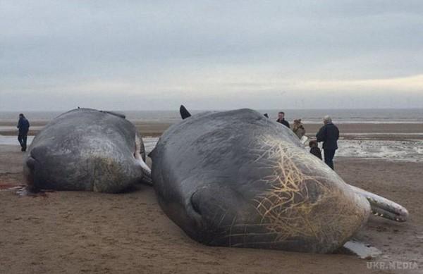 Мертві кити4