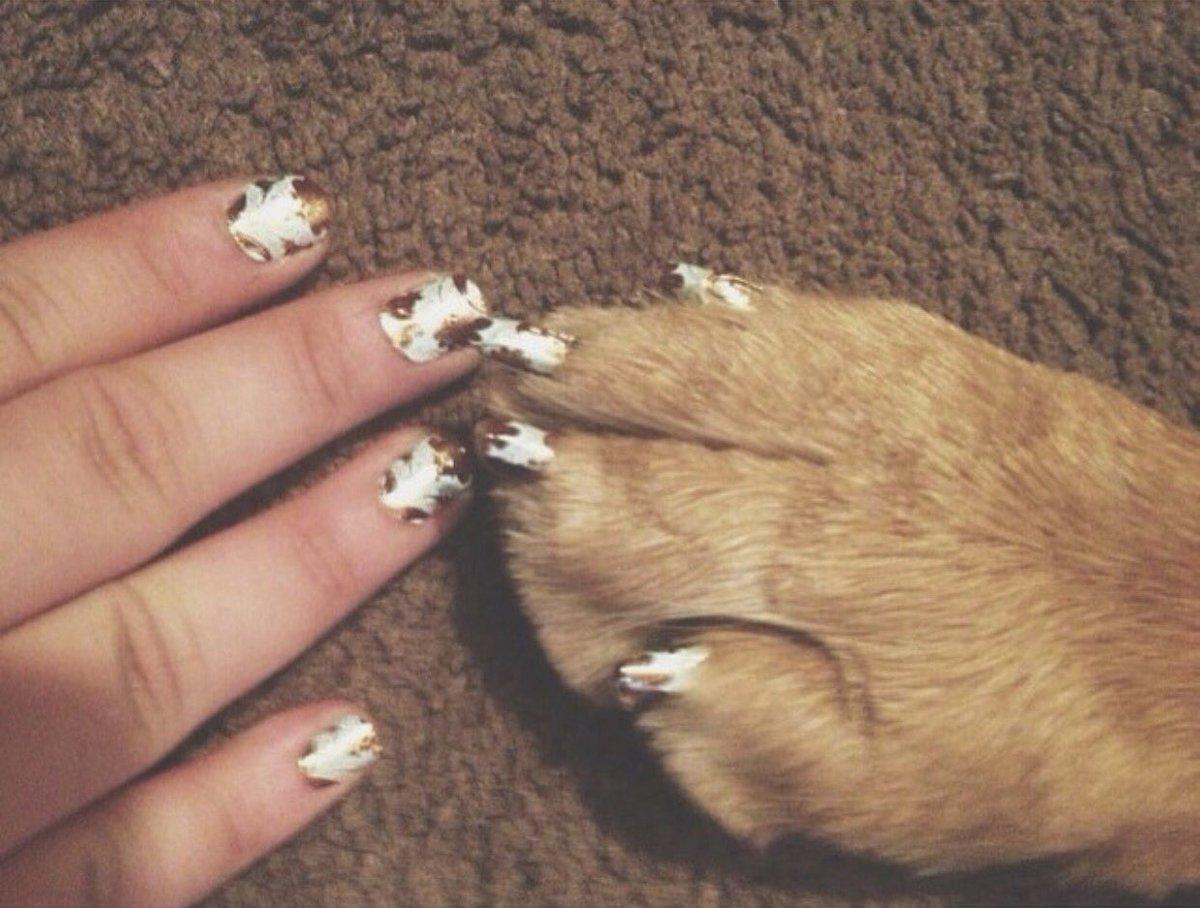 Новое модное безумие: девушки и кошки «носят» одинаковые ногти. ФОТО
