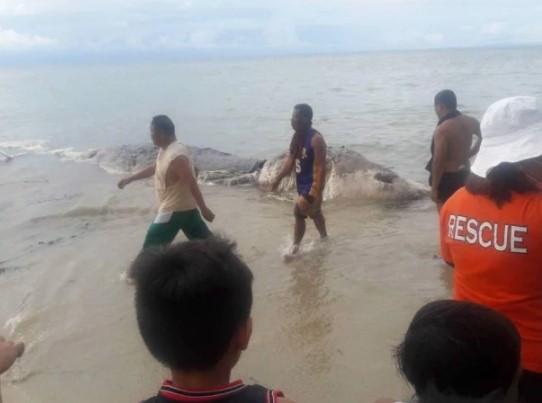 На берег вынесло таинственное морское чудовище