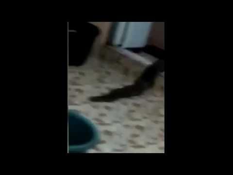Господар будинку зафіксував справжнього монстра, який виповз з його туалету: відео