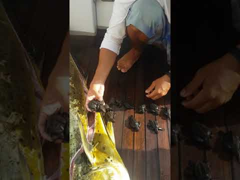 Невероятно: поразительная находка в желудке гигантской рыбы