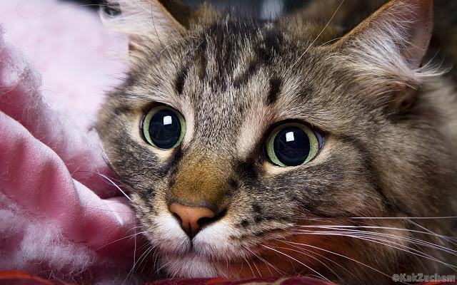 Почему ваша кошка «пришла» именно к вам, или Чего вы еще не знали о кошках?