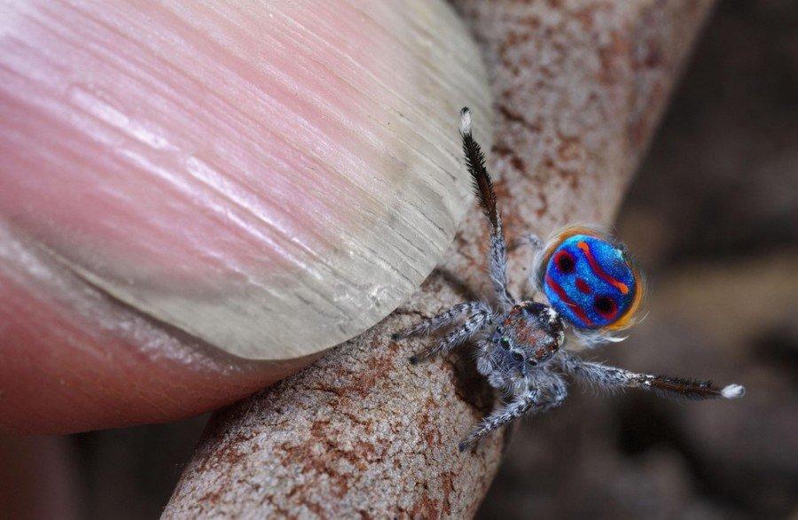 Пауки показали, где прячется самая маленькая радуга