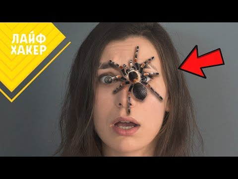 Простыми словами: почему мы боимся пауков и как с этим бороться
