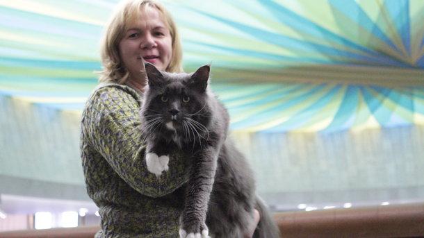 В Киеве выбрали самого большого кота Украины