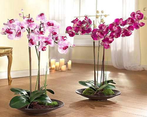 Онлайн каталог комнатных растений