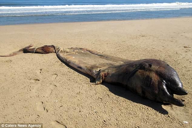У побережья нашли неизвестное науке существо