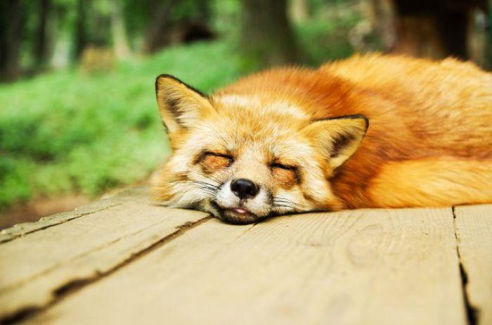 """Забудьте о """"8 часах сна"""": вот сколько нужно спать на самом деле"""