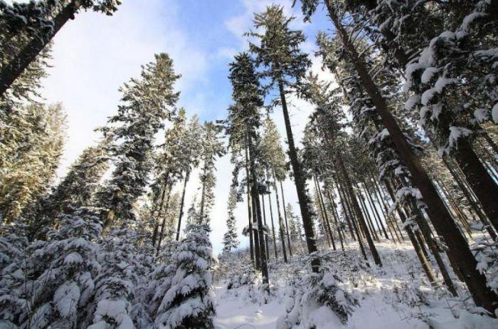 Забудьте о зиме: украинцев испугали прогнозом
