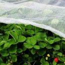 Надежный источник для приобретения товаров для сада и огорода