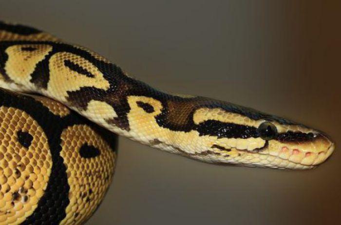 Женщина нашла двуглавую змею посреди двора. ФОТО