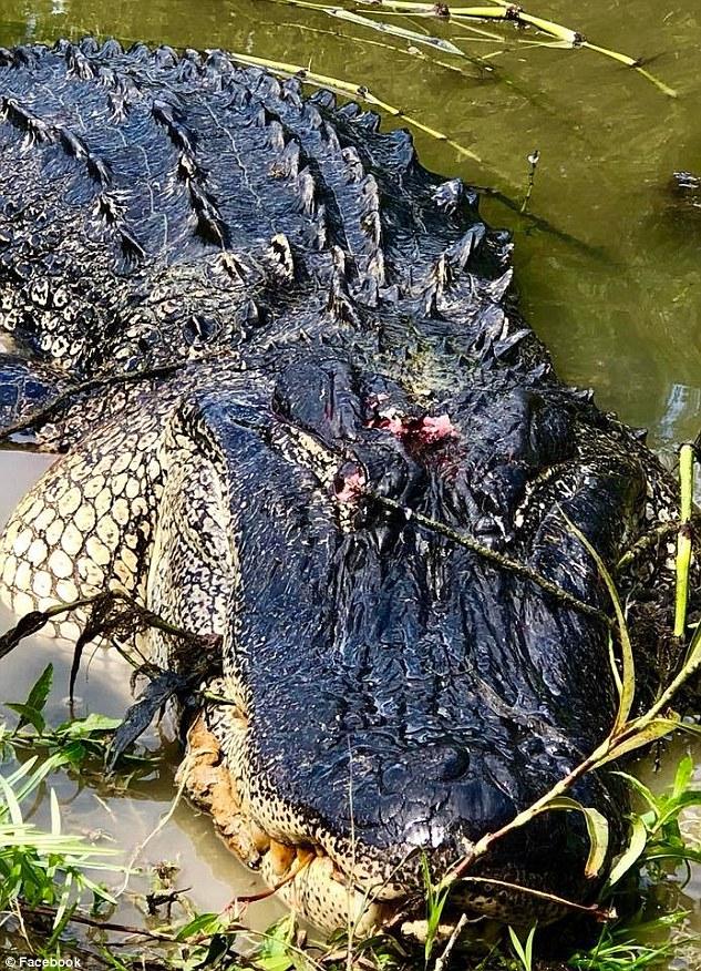 73-летняя бабушка убила 4-метрового крокодила, который съел ее пони. ФОТО
