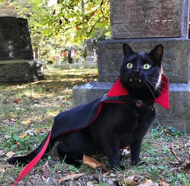 Черный кот-вампир стал звездой Сети. ФОТО