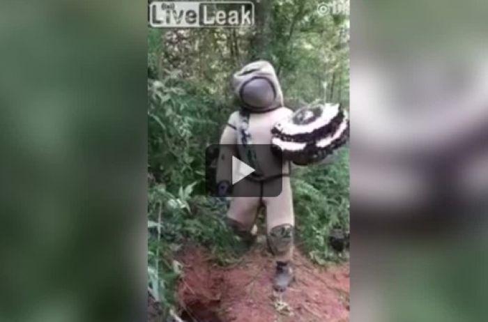 Парень снял на видео, как пляшет с шершнями: этот танец стал последним