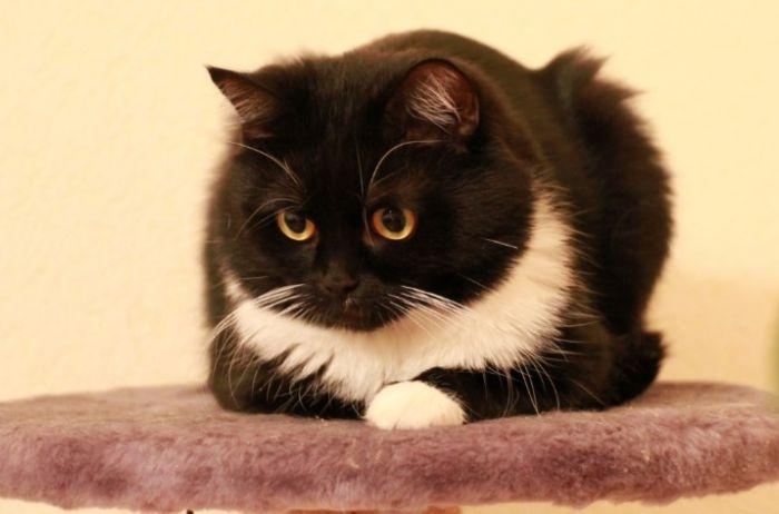 Кот или ворон: Сеть спорит о странном фото
