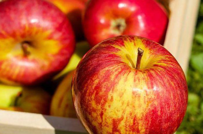 Врачи объяснили, кому нельзя есть яблоки