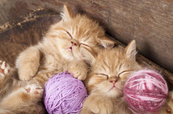 6 главных факторов: как правильно выбрать котенка
