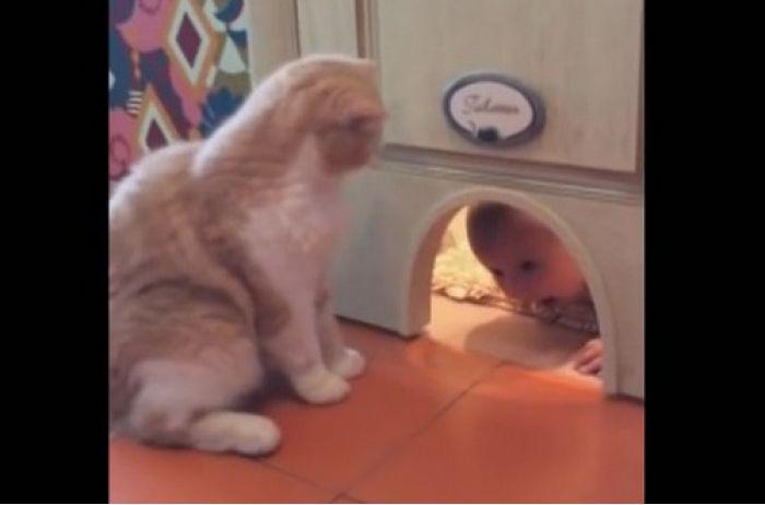 Необычный кот навел ужас на соседей. ВИДЕО
