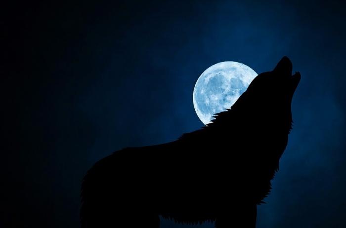 Ученые выяснили, почему собаки и волки воют на луну