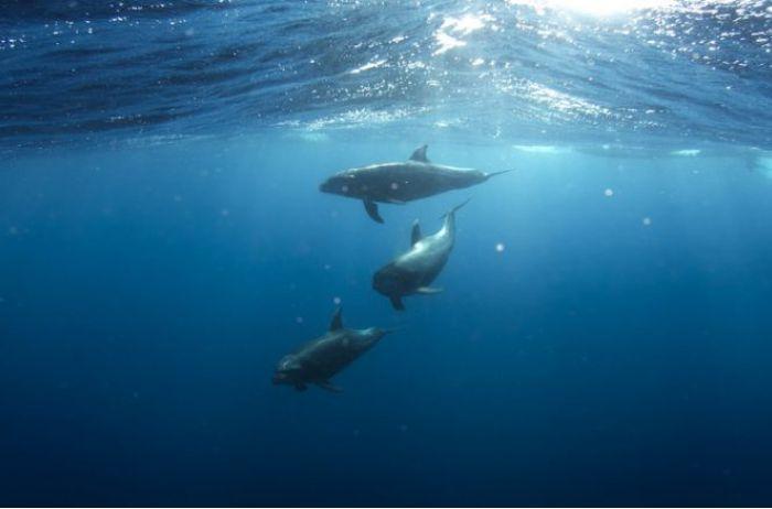 Ученым удалось найти в Черном море «живую воду»