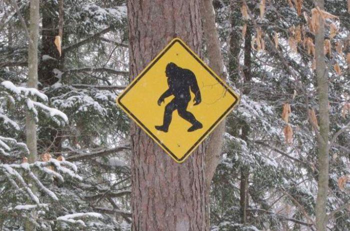 Жители Канады в ночном лесу столкнулись с гуманоидом. ВИДЕО