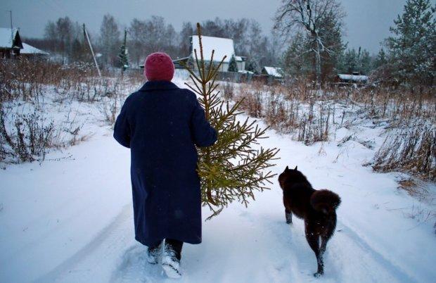 Как правильно убрать елку: главные народные приметы