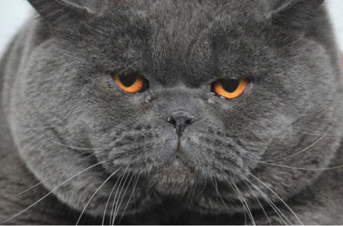 Медики назвали еще одну опасность домашних кошек