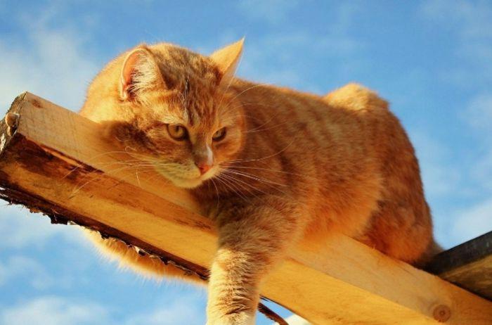 Верные приметы о кошках, о которых вы могли не знать