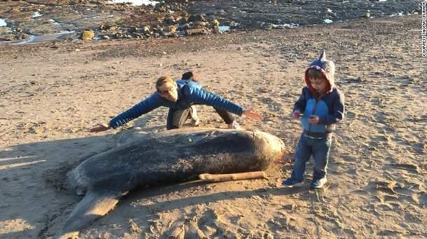 Пугающую тварь выбросило на океанский берег: ученые разводят руками, поразительные ФОТО