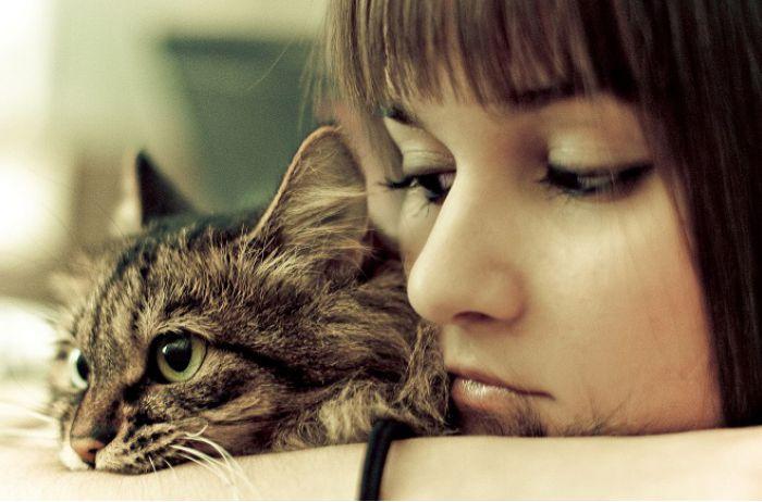 Что делать, если вас не любит ваша же кошка