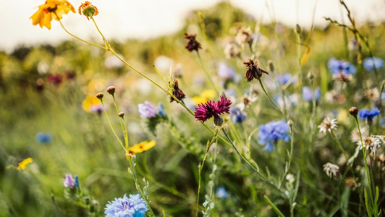 Летний сезон на носу? Синоптики озвучили прогноз погоды на три месяца