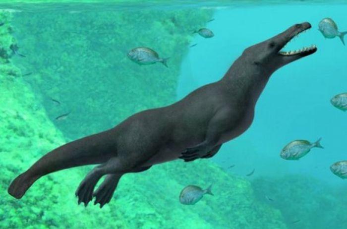 Ученые обнаружили останки четвероногого кита