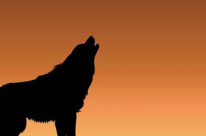 Толкование примет: к чему воет собака