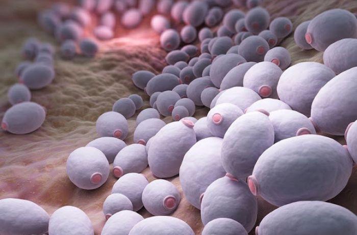 6 признаков того, что ваш организм убивает грибок кандида:  рецепт натурального средства