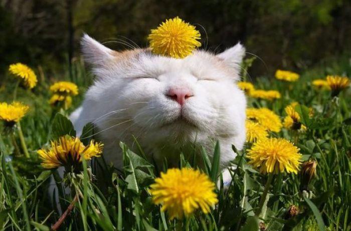 Выходные на майские праздники: в какие дни будут отдыхать украинцы