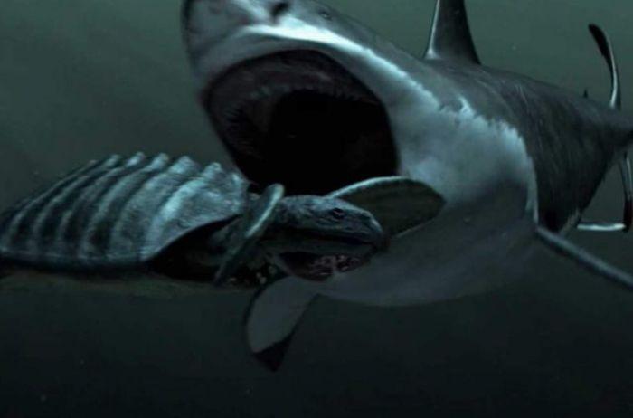 На дне океана удалось увидеть самого крупного хищника планеты. ВИДЕО