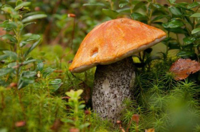 Кому категорически противопоказаны грибы: ответ медиков