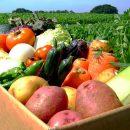 Продажа любой сельскохозяйственной продукции на агропортале без посредников