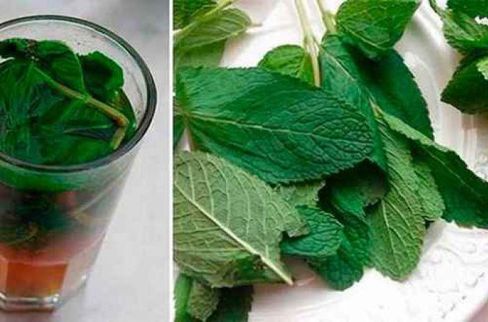 Чистим организм от токсинов полностью: всего 1 лимонно-мятный напиток в день