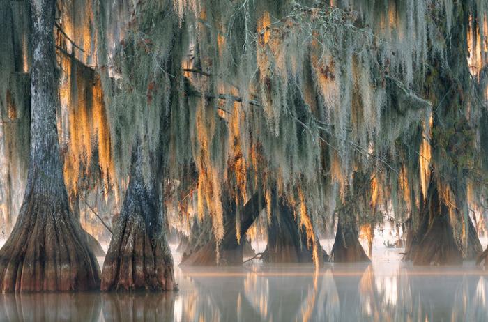 В Северной Каролине обнаружили дерево возрастом 2600 лет