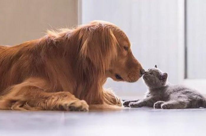Стало известно, кто полезнее для здоровья – собаки или кошки