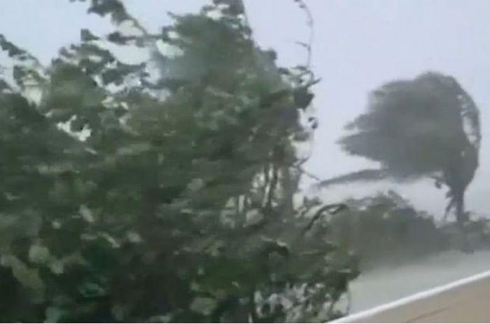 Тысячи домов обесточены, повалены сотни деревьев: ураган забрал жизни нескольких человек