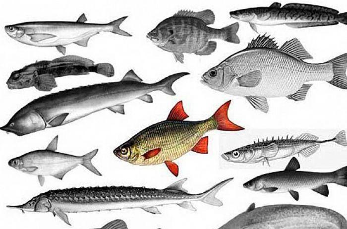 Названы виды рыбы, которые лучше не покупать никогда