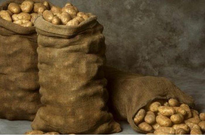 Будет на столе только по праздникам: прогноз цены на картофель