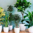 Названы комнатные растения, которые должны стоять в каждой спальне