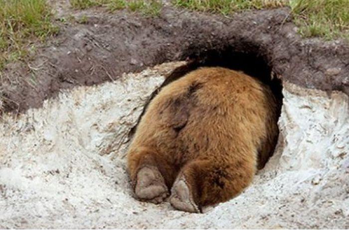 """В Карпатах буянят медведи, местные перепуганы: """"Боюсь, чтобы не убили"""""""