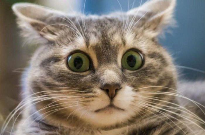 Кот стал звездой Интернета, открыв свой магазин. ВИДЕО